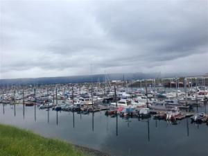 The harbor on the Homer Spit