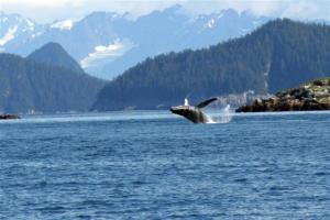 Ah, a Humpback finally got in range of the 300mm telephoto.